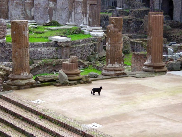 Rome 2000 – cats in the Largo di Torre Argentina